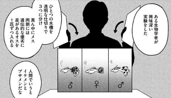 メガマッチ・グッピー理論.PNG